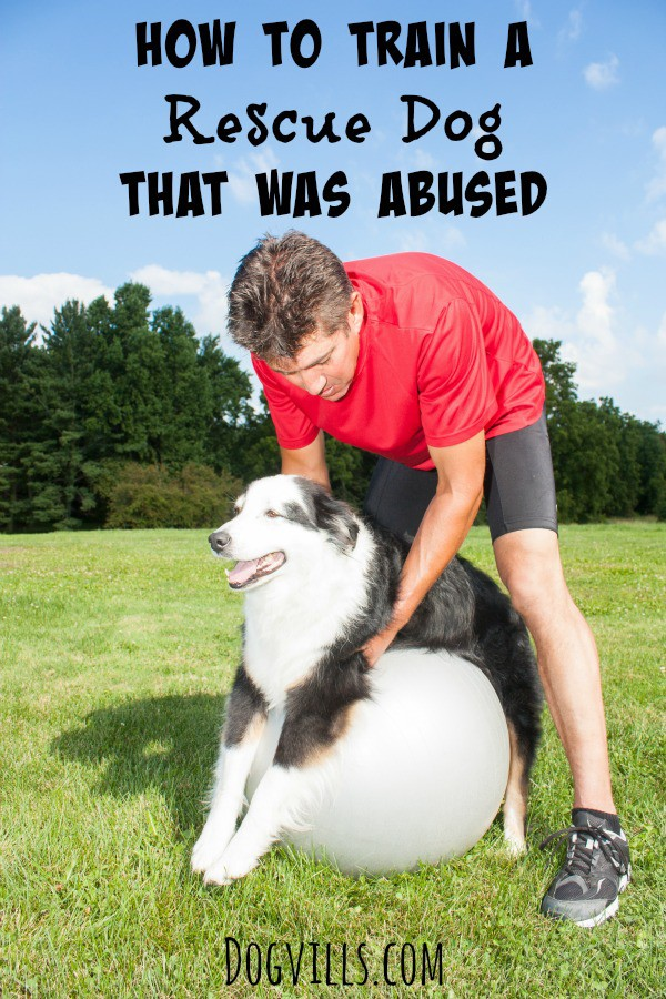 How To Train A Rescue Dog That was abused