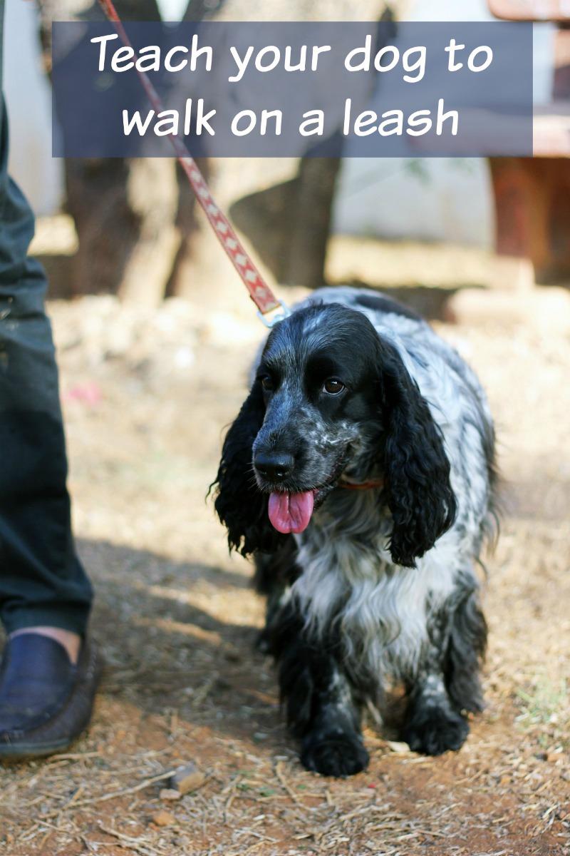Training Your Dog to Walk Nice on a Leash