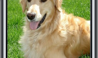 4 Amazing Dog Training Apps for Your Smartphone