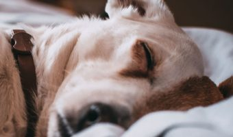 Check out our tips on where to find the best cheap extra large dog beds.