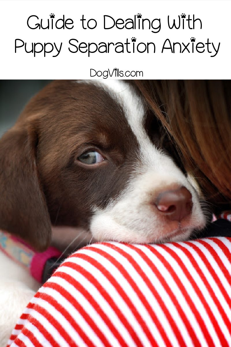 Complete Guide to Dealing With Separation Anxiety In Your Puppy