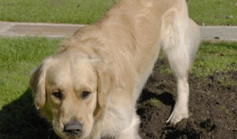 Dog training tips to stop your dog from digging