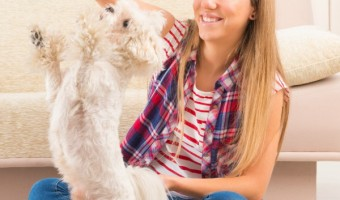 Dog Training Tips For Apartment Dwellers