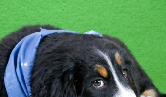 Dog training tips to help your puppy overcome fear of strangers: If your pooch shies away from meeting new people, check out our dog training tips to help your puppy overcome a fear of strangers.