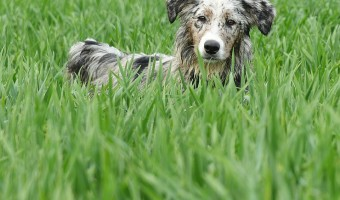 Wouldn't it be nice to know that your dog will stay in your yard instead of roaming? Our dog training tips may be able to help! A fence or other containment system can ensure your dog stays confined to a specific area, but that may not always be feasible.