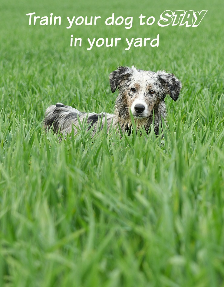 How To Train Your Dog To Stay In Your Yard
