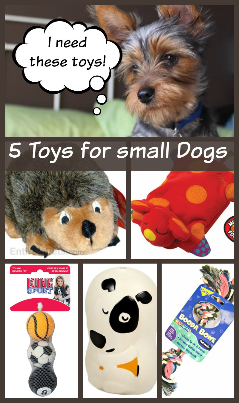5 Small Dog Toys Your Dog Can't Live Without