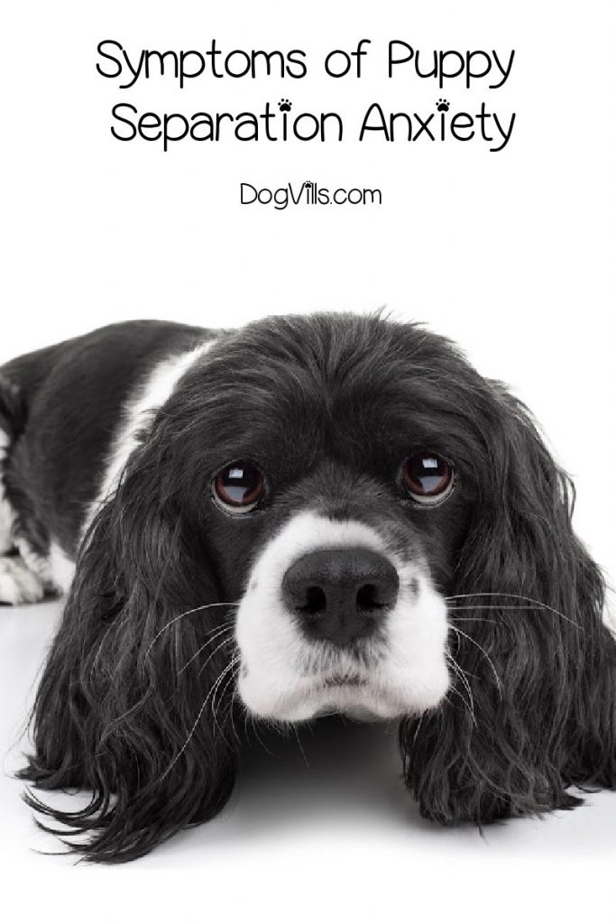 Before we can talk about how to deal withpuppy separation anxiety, we need to make sure that's actually what we're dealing with. Here are the most common symptoms.