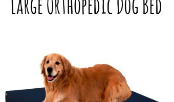 Tips For Choosing A Large Orthopedic Dog Bed