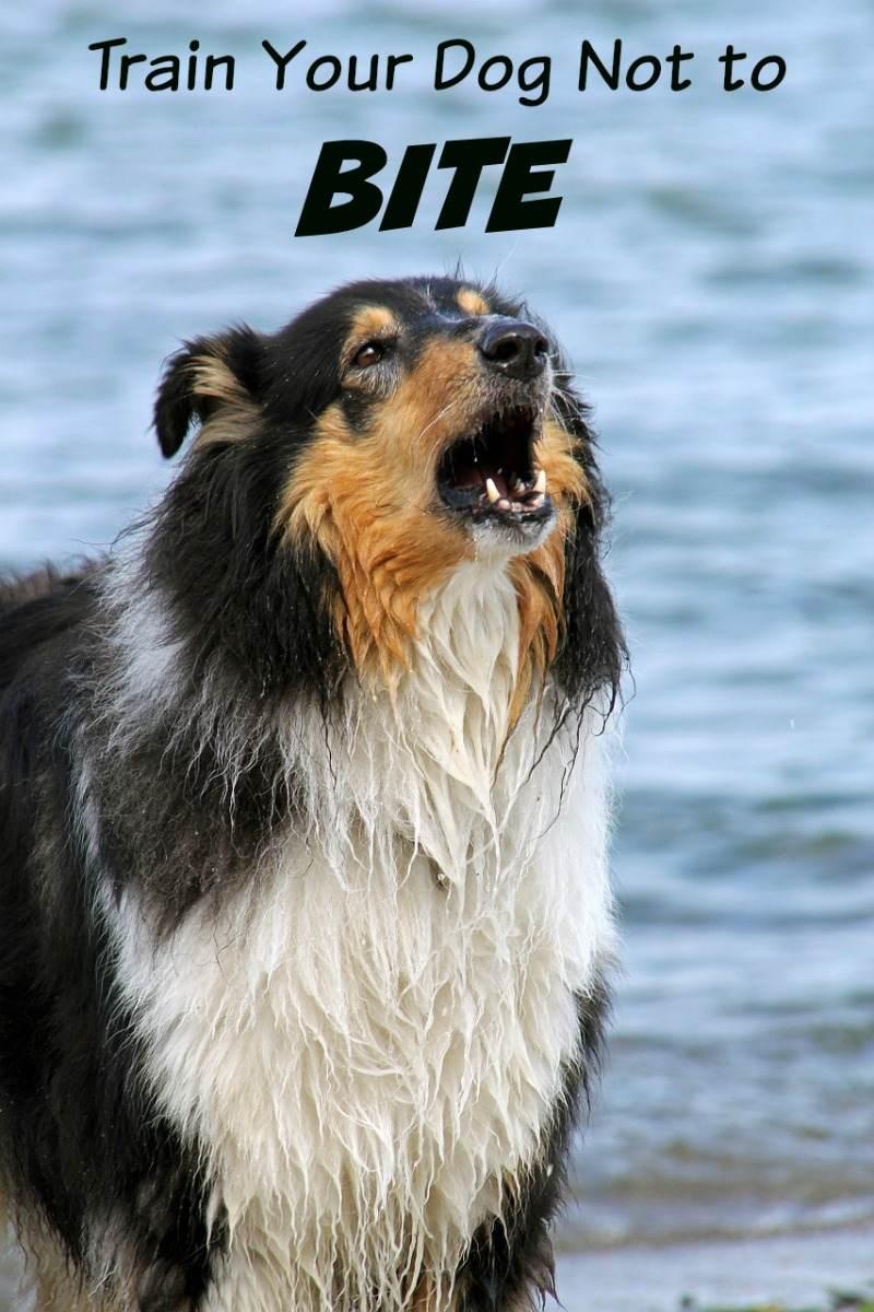 Dog Lightly Biting