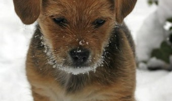Winter Concerns for Your Dog You May Not Have Considered