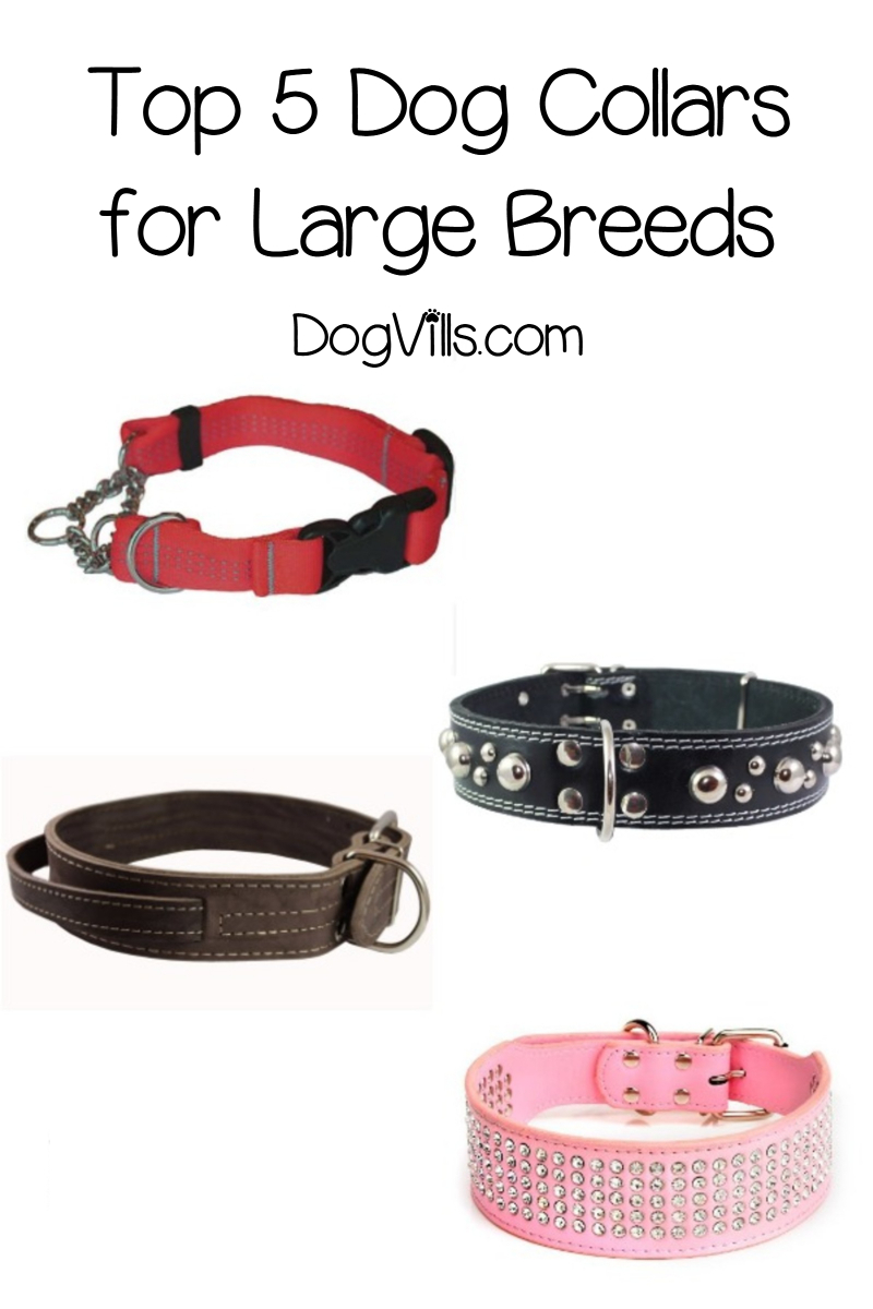 5 Best Dog Collars For Large Dogs