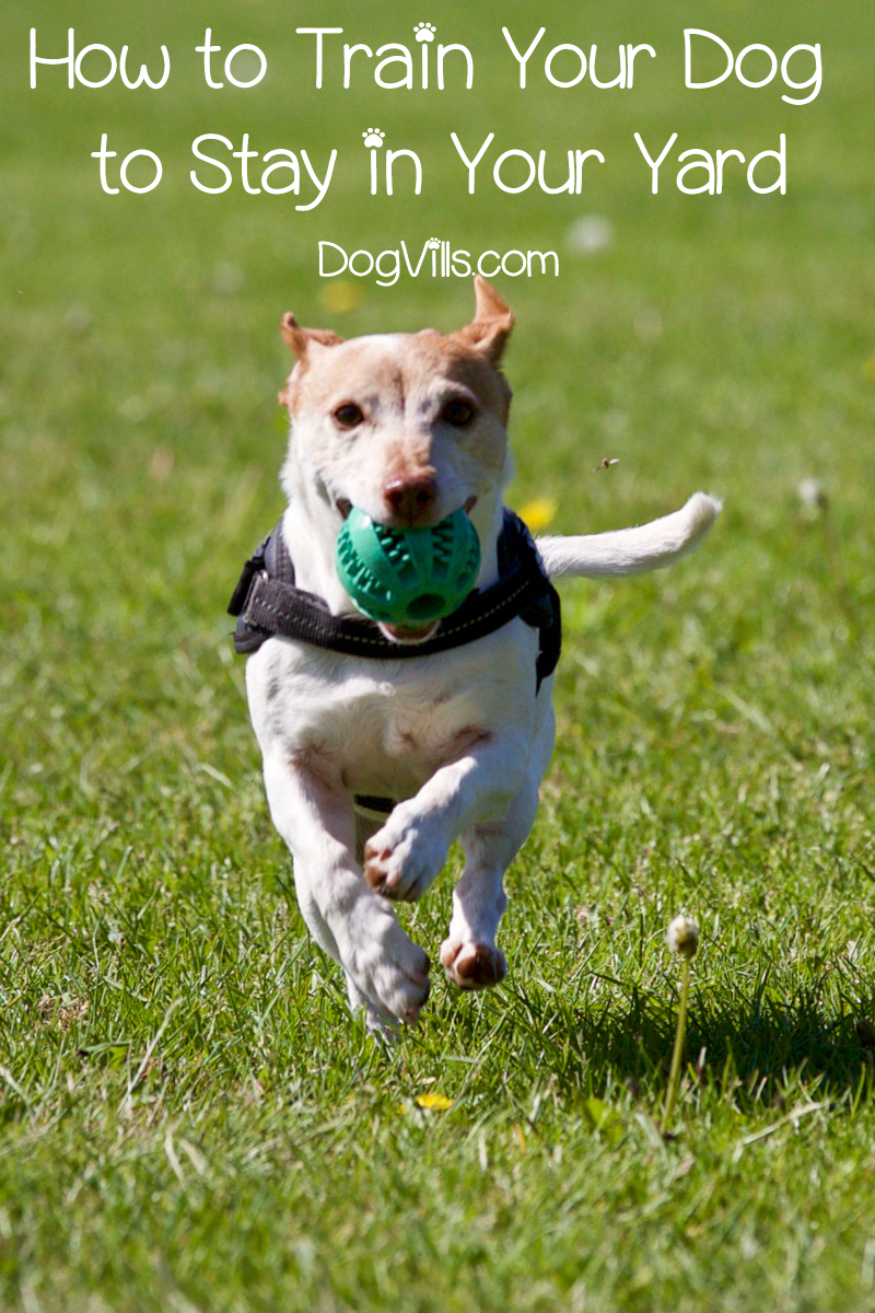 Dog Training Tips: Training your Dog to Stay in the Yard