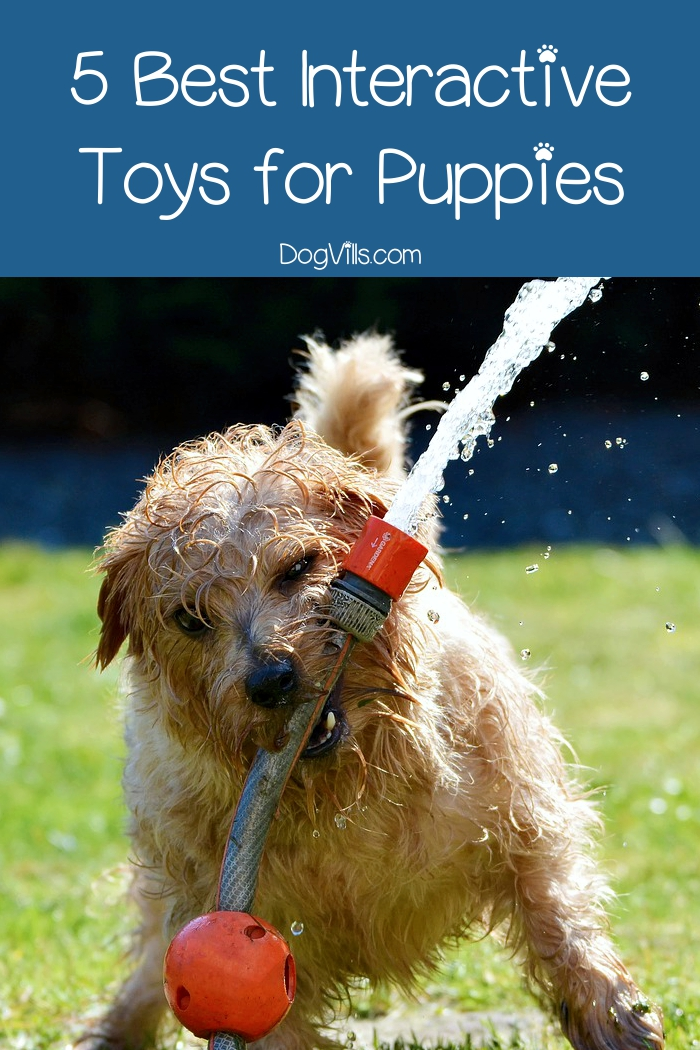 The Best Interactive Dog Toys For Puppies