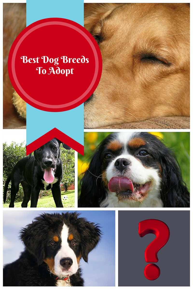 Choosing the Best Dog Breeds to Adopt for Your Lifestyle