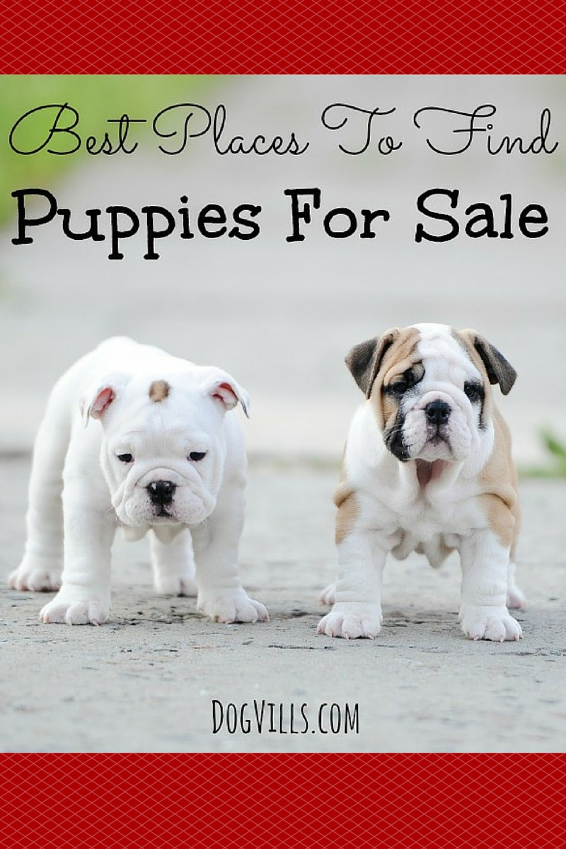 Best Places To Find Puppies For