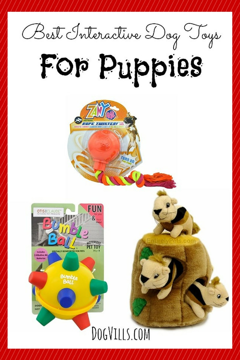The Best Interactive Dog Toys For Puppies Dog Vills