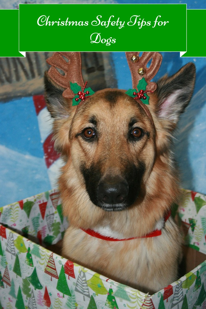 Incredibly Important Christmas Safety Tips for Your Dog