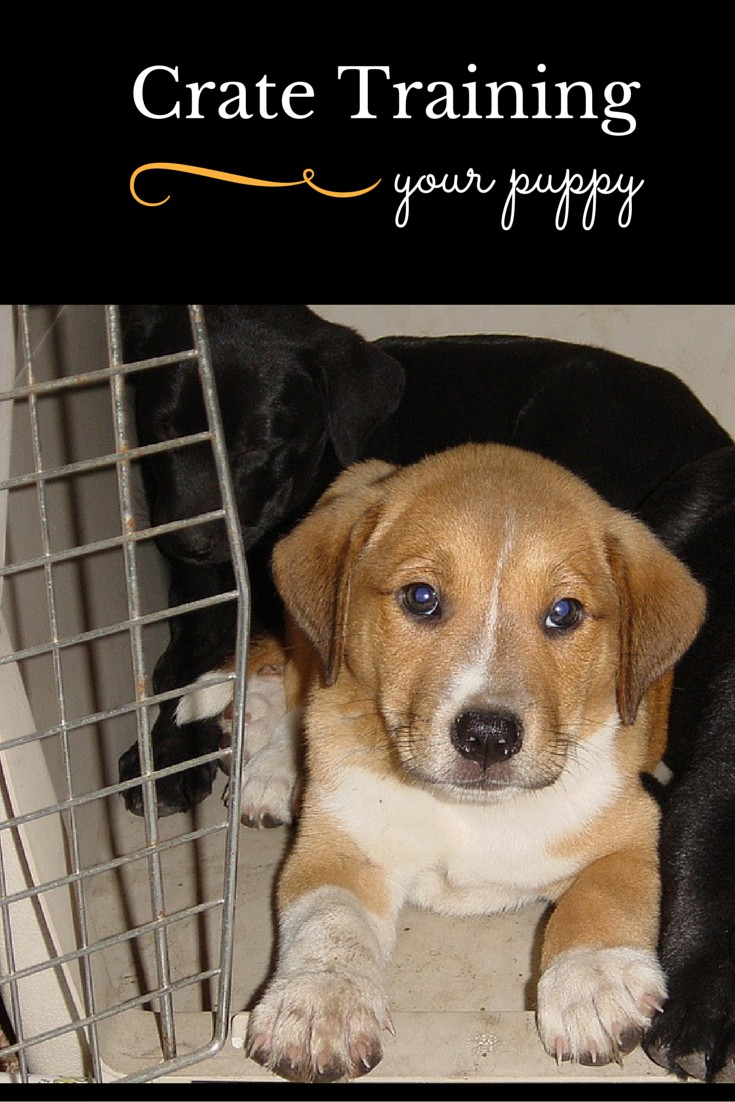 Puppy Crate Training That's Easy as 1-2-3