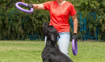 Dog Training Certification: What You Need To Know