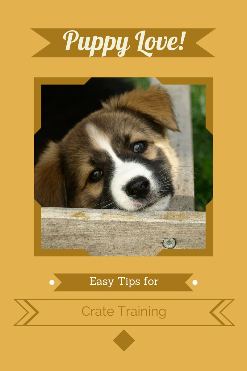 Tips For Easy Puppy Crate Training