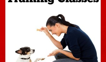 Where To Find The Best Puppy Training Classes