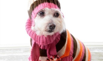 Check out our tips for the Best Way To Pick A Dog Sweater and start dressing your pooch up in the latest pet fashions! You'll have the best dressed dog!