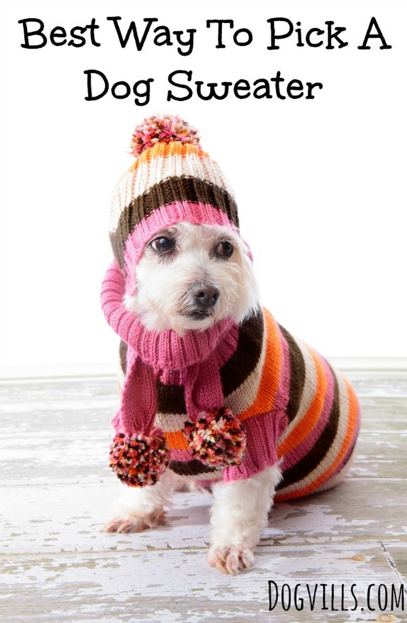 Best Way to Pick a Dog Sweater- DogVills