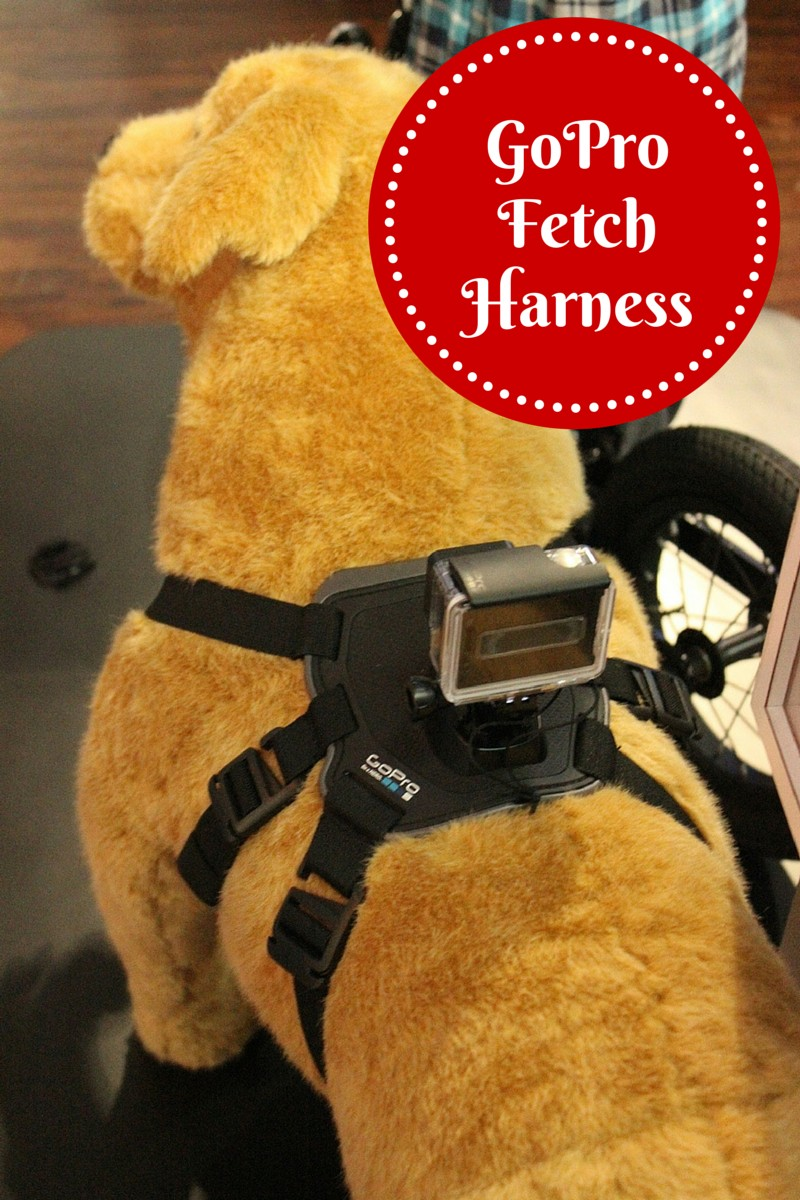 GoPro Fetch Dog Harness Offers a New Perspective for Dog Parents
