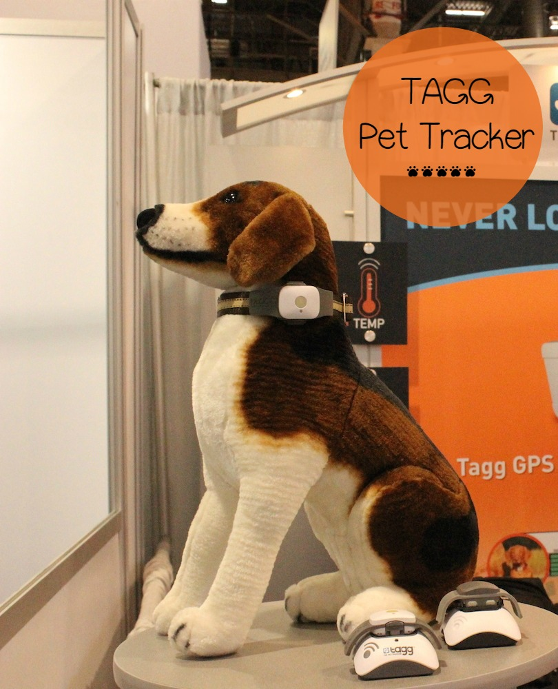 Track Your Dog's Exercise & Location with Tagg Pet Tracker