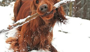 Planning to train your new puppy in the winter? Check out our dog training tips for keeping both you and your pooch safe in the snow and cold!
