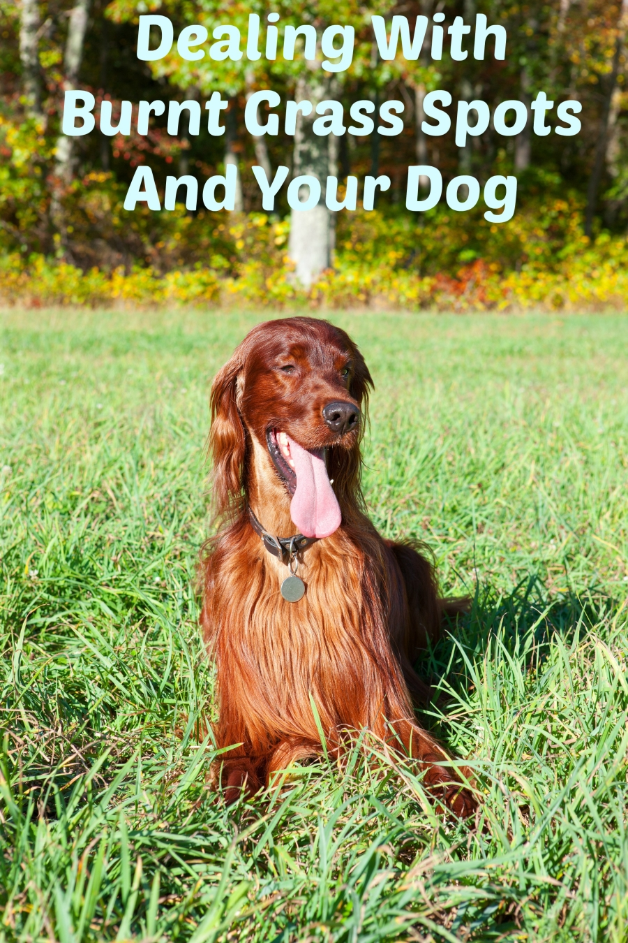 Dealing With Burnt Grass Spots From Your Dog
