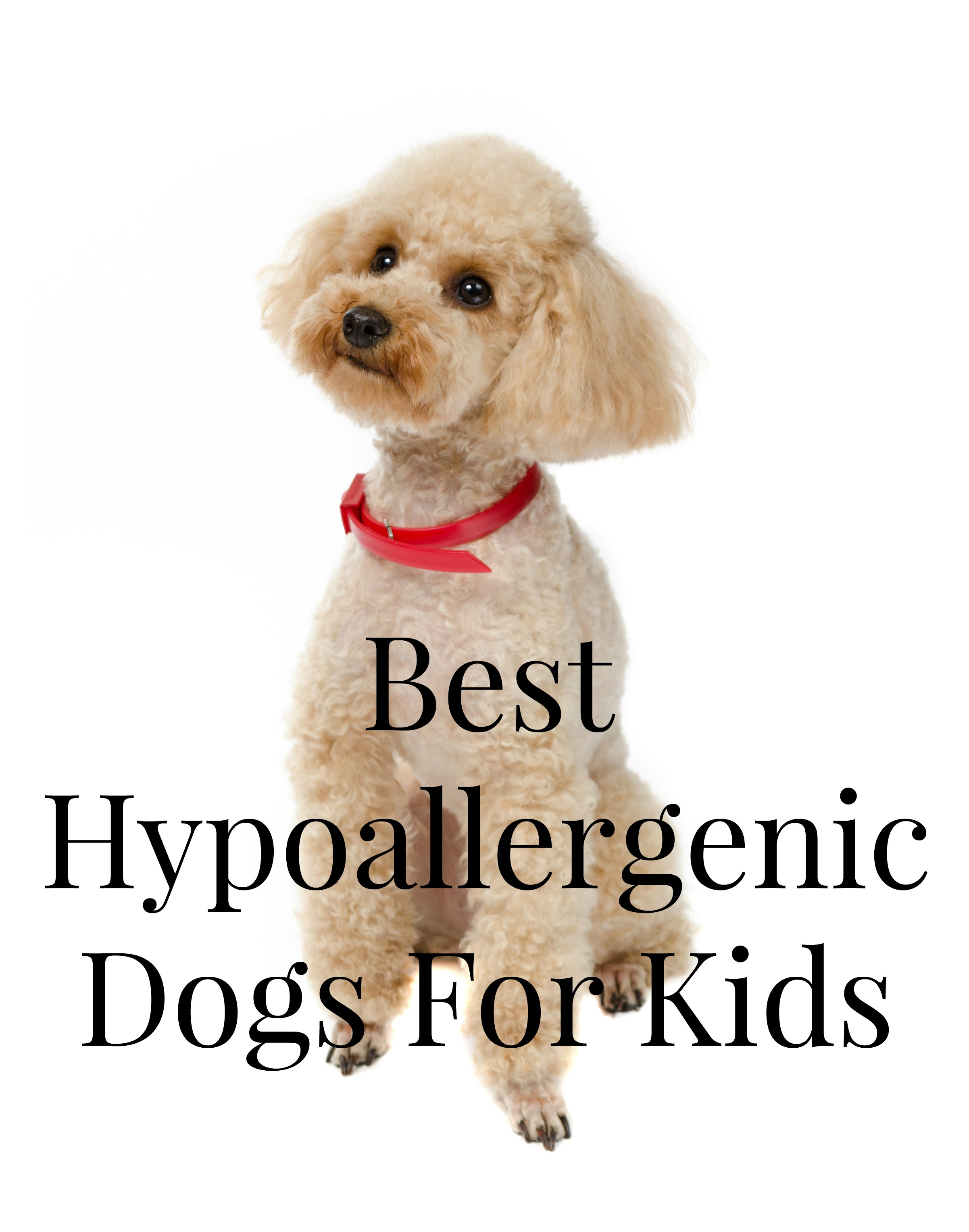 Best Kid Friendly Hypoallergenic Dogs