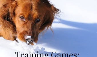 Playing training games to stimulate your dog's sense of smell isn't just a way to teach him useful new tricks, it's also a fun way to switch things up!