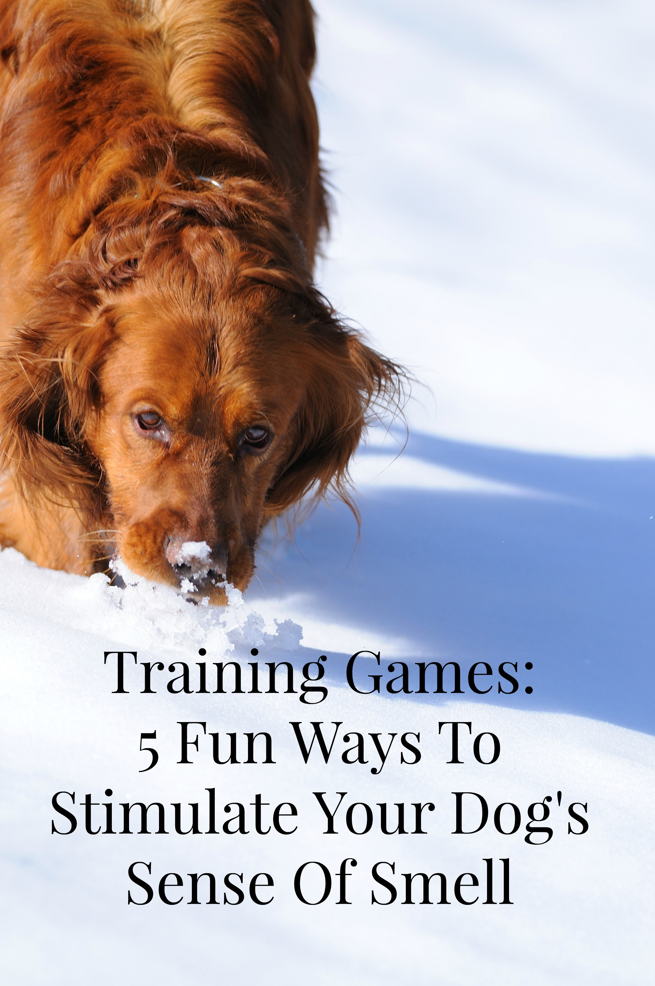 training games to stimulate your dog s sense of smell
