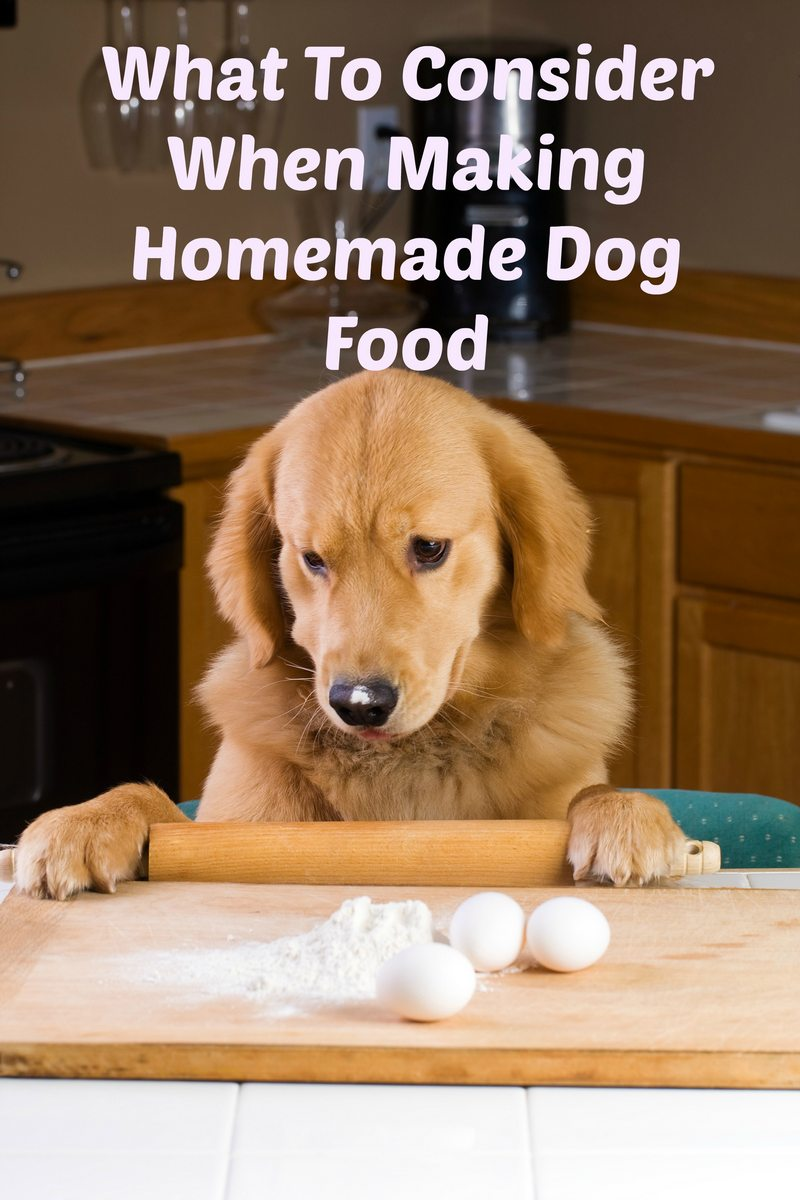 What To Consider When Making Homemade Dog Food