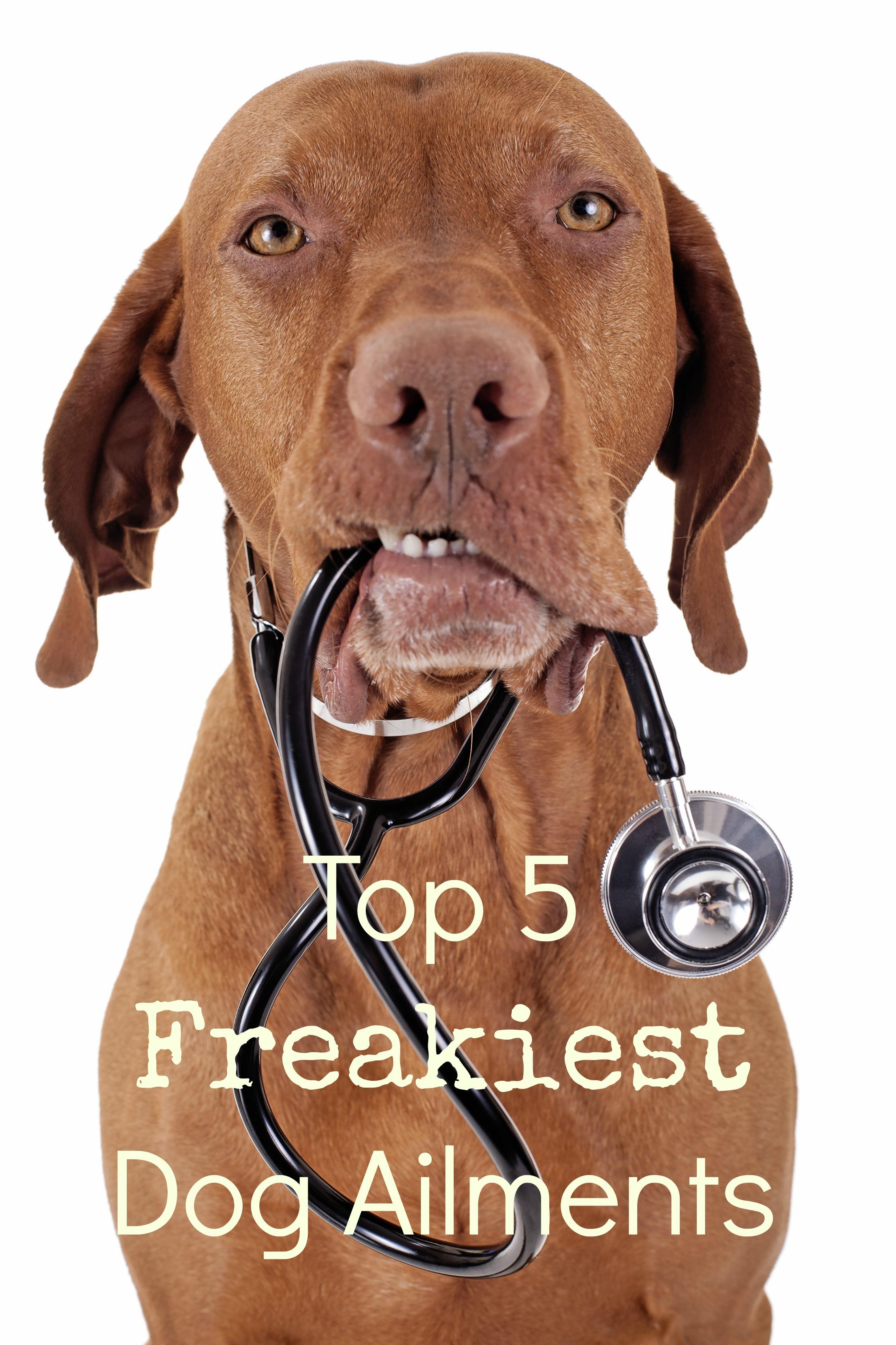 Top 5 Freakiest Dog Ailments Dog Vills