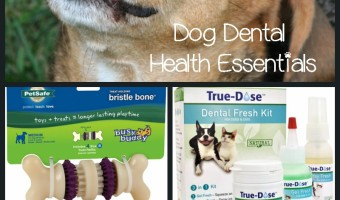 We're sharing some products to make at-home dog's dental health care a bit easier! Everything from toothbrushes to toys to keep Spot's smile in shape!