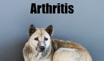 Super Products For Dogs With Arthritis
