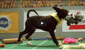 Check out Animal Planet's video of the final touchdown in the thrilling Puppy Bowl 2015!