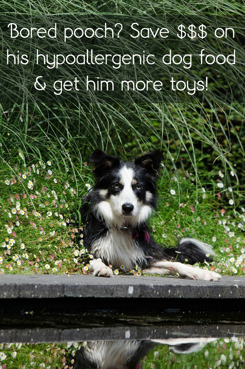 How to Save Money on Hypoallergenic Dog Food
