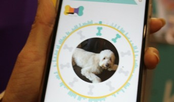 Wonder Woof does more than just track your dog's location & activity. It's also an incredible training tool, community for socializing and more.