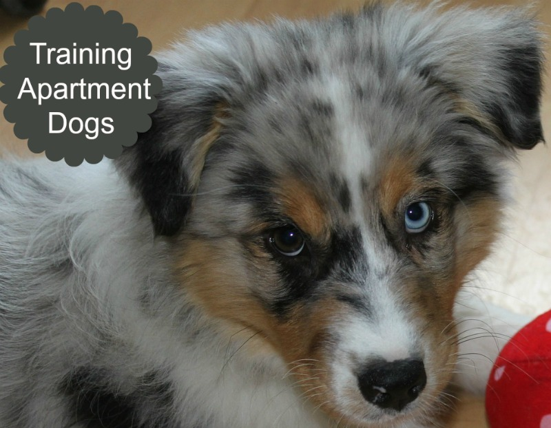 Five ways to make your apartment dog friendly dog vills for Most apartment friendly dogs