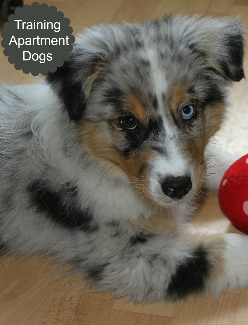 Tips for Curbing Aggression in Apartment-Living Dogs