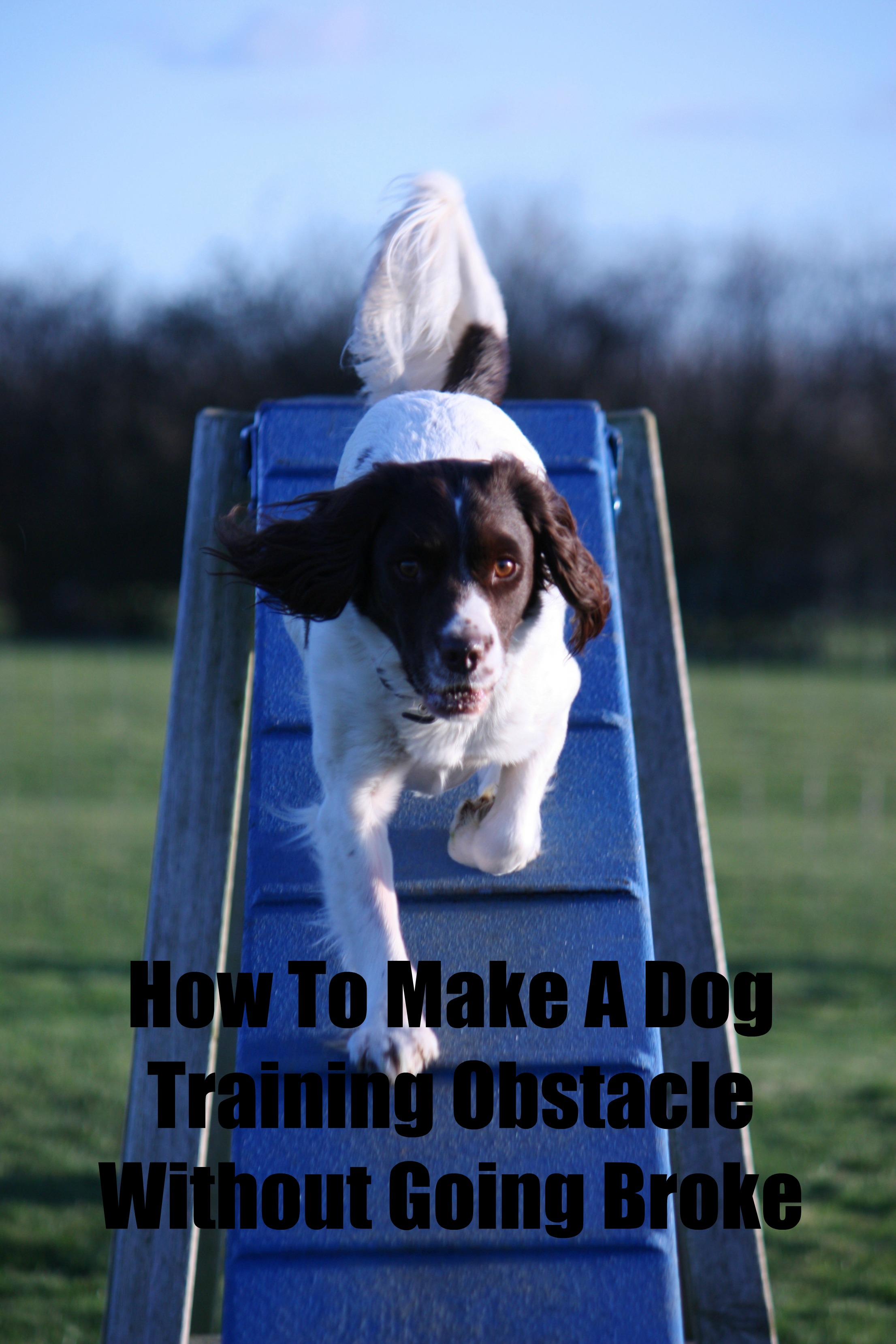 How To Make A Dog Training Obstacle Course Without Going Broke
