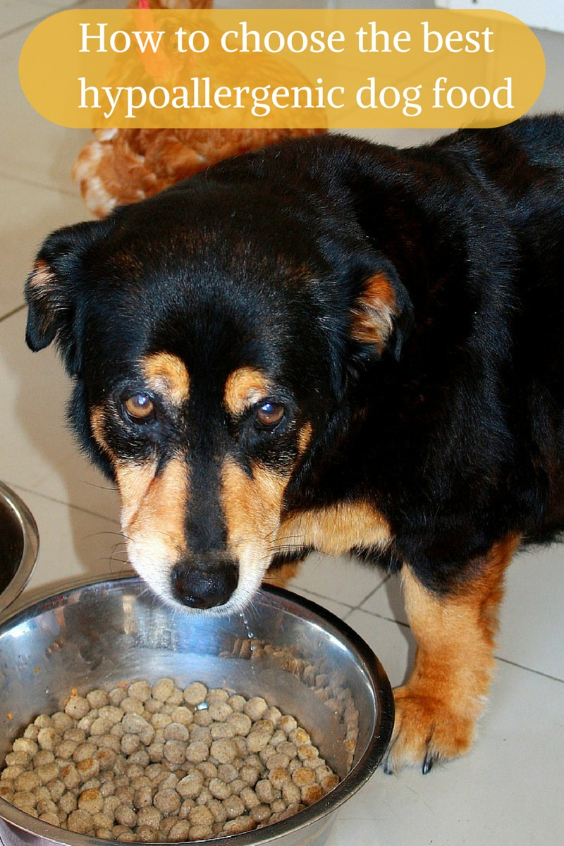 How to Choose the Best Hypoallergenic Dog Food