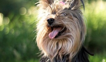 Best Tools for Grooming Your Hypoallergenic Dog