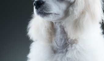 Wondering if there is a hypoallergenic dog breed test that can help you figure out which breed is best for you and your family? There actually is!