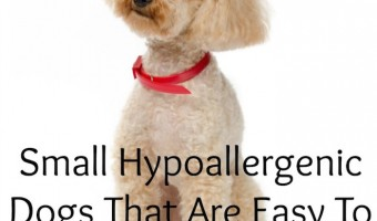 easiest hypoallergenic dogs to housetrain