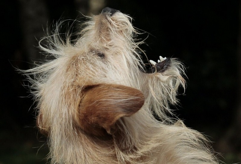 Hypoallergenic Dog Food - Dogs Have Allergies Too